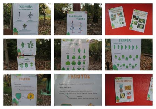 colaj lectii botanica